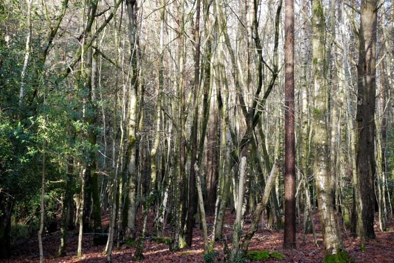 Leafless Trees.
